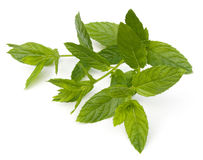 Spearmint. Fresh Spearmint leaves (Mentha spicata) isolated on a white background Stock Photo