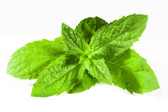 spearmint Obrazy Royalty Free