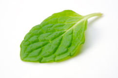 Spearmint Royalty Free Stock Images