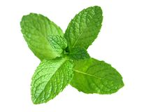 Spearmint Stock Images
