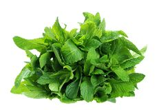 Spearmint Stock Photography