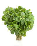Spearmint herb Royalty Free Stock Photography