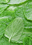 Spearmint herb background Royalty Free Stock Image