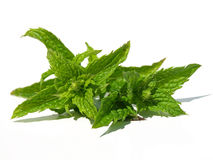 Spearmint leaves Royalty Free Stock Images