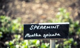 Spearmint Stock Image