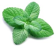 Spearmint or mint on white background. Top view. stock photography