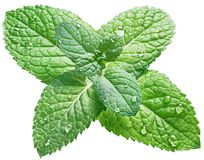 Free Spearmint Or Mint Leaves With Water Drops On White Background. Royalty Free Stock Image - 114278786