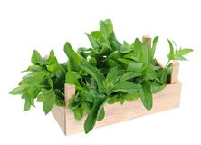 Spearmint in wooden crate Royalty Free Stock Photography