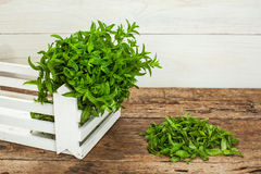 Spearmint on a wooden table Stock Image