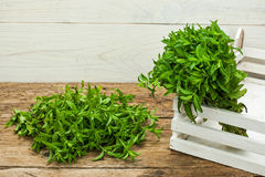 Spearmint on a wooden table Stock Photos