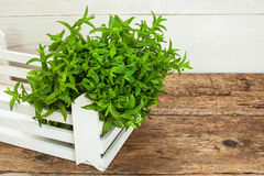 Spearmint on a wooden table Stock Photography