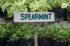 Spearmint znak Zdjęcia Stock