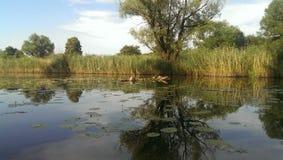 Specchio del lago Immagini Stock Libere da Diritti