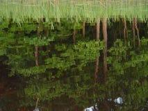 Specchio del lago Fotografia Stock
