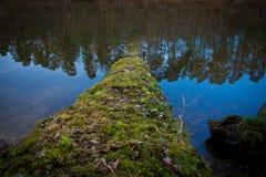 Specchio della conifera del lago dell'acqua di connessione fotografia stock