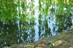 Specchio di legno dell'acqua dell'albero di salice Fotografia Stock Libera da Diritti