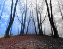 Specchio terrificante in foresta nebbiosa scura Fotografie Stock