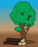Specht op een boom Royalty-vrije Stock Afbeelding