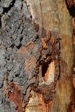 Spechtloch im Baum Stockfotografie
