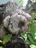 Speciaal deel van een boom Royalty-vrije Stock Fotografie