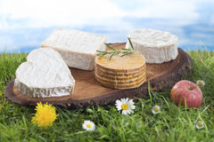 Speciaity cheese from Normandy in France Royalty Free Stock Photo