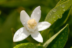 Special anaranjado del flor en verde Foto de archivo libre de regalías