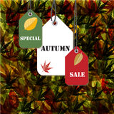 Special autumn sale background. Illustration of Special autumn sale background design Stock Image