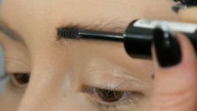 Special brush for combing eyebrows. Professional makeup artist is combing the eyebrows of girl model stock video