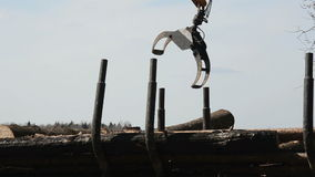 Special cargo truck with crane unload logs from truck. Forest fell. stock video footage