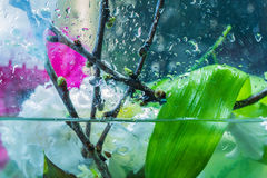 Special certain fresh flowers composition in a water. royalty free stock photography