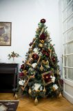 A special Christmas tree stock photography