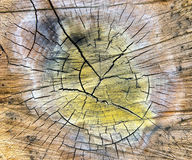 Special cracked old wood cut texture Royalty Free Stock Photos