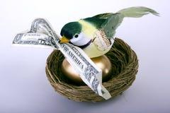 Special di uccello in anticipo Immagine Stock
