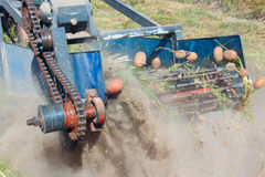 Special equipment on a tractor for digging the potato Royalty Free Stock Photography