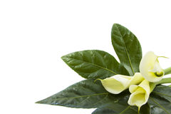 Special flowers Stock Images