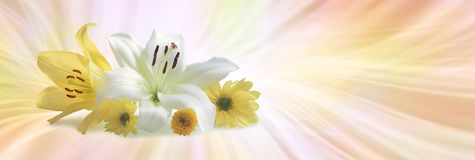 Special flowers for a Special Occasion Royalty Free Stock Photo