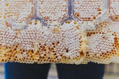 Special honey comb, close up, flowing, bee-garden, natural products,apiary behind jeans stock image