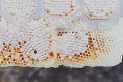 Special honey comb, close up, flowing, bee-garden, natural products,apiary royalty free stock images