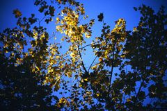 Special leaves. Leaves in the sunshine Royalty Free Stock Photos