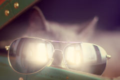 Special look at holiday. Blurred outlines of a cat in sunglasses looking out of a suitcase in the sunlight royalty free stock photography