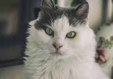 Special Looking Cat. Is a great background image Royalty Free Stock Photos
