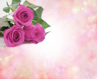 Special Mothering Sunday Pink Roses Stock Photo