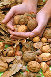 A special offer of walnuts, almonds and hazelnuts Stock Photos