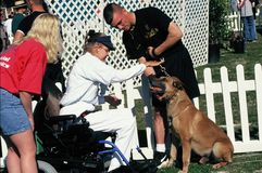 Special Olympics participant pets a police dog. Taken at park near Los Angeles, CA circa 1989 royalty free stock image