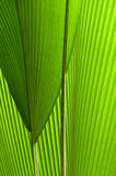 Special palm-leaf Stock Image