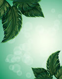 A special paper with big pointed leaves Royalty Free Stock Image