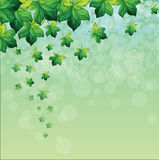 A special paper with green background Royalty Free Stock Photo