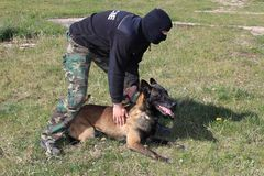 Special police dog in training. SWAT royalty free stock photos