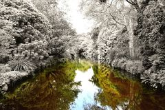 Frosty Special reflection Royalty Free Stock Photos