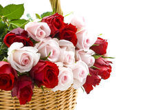 Special roses for you Stock Photography